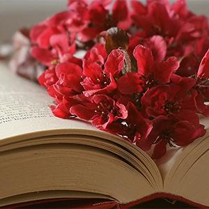 Mach deinen Traum wahr und schreib DEIN Buch!